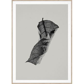Paper Collective plakat, Sabi Leaf #4