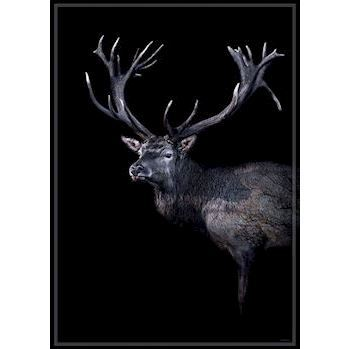 ChiCura plakat, Dear Red Deer